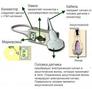 анатомия 1
